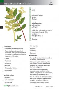 BotanicalMedicine_interior_page_230