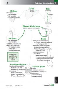 BotanicalMedicine_interior_page_485