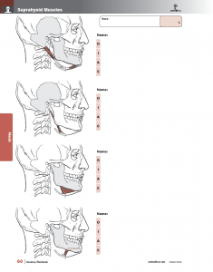 Muscle-Manual-Anatomy-Workbook-page3