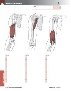 Muscle-Manual-Anatomy-Workbook-page6