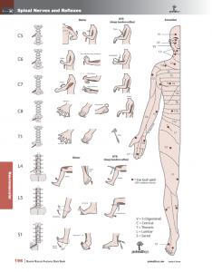 Muscle-Manual-Anatomy-Workbook-page7