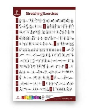 Stretching Exercises Poster