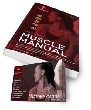 Manual pdf muscular system the