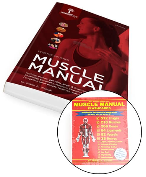 Muscle-manual_flash-cards