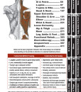 Physical Medecine – Quick Reference Evidence Informed