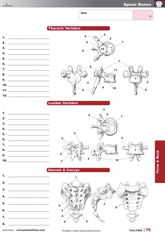 Muscle manual student workbook lab manual ebook prohealthsys wkbkmm07lrg musclemanualworkbooklebook fandeluxe Image collections