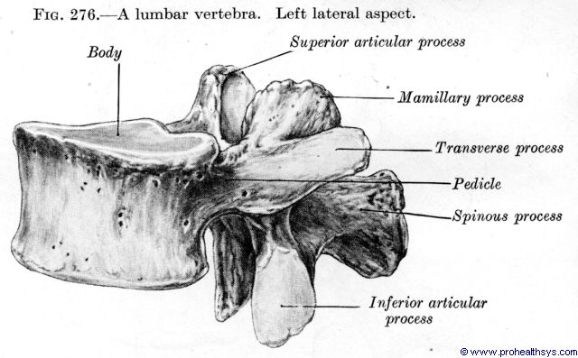 Lumbar vertebra lateral view - Figure 276
