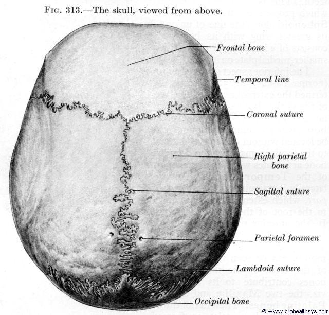 Top of skull - Figure 313