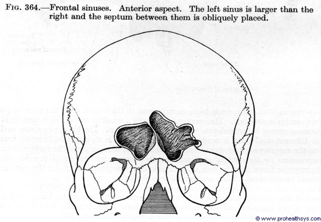 Frontal sinuses anterior view - Figure 364