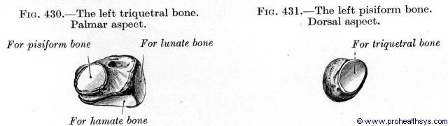 Triquetrum bone palmar view and pisiform bone dorsal view - Figures 430-431
