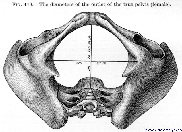 Female pelvis outlet diameters - Figure 449
