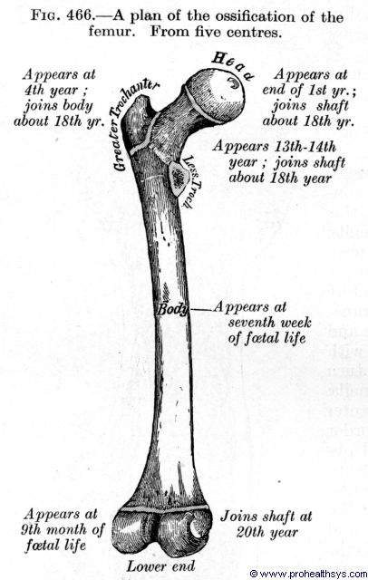 Ossification projection for the femur - Figure 466