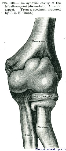 Synovial cavity of elbow joint anterior view - Figure 533