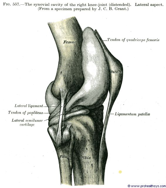 Knee joint - Prohealthsys