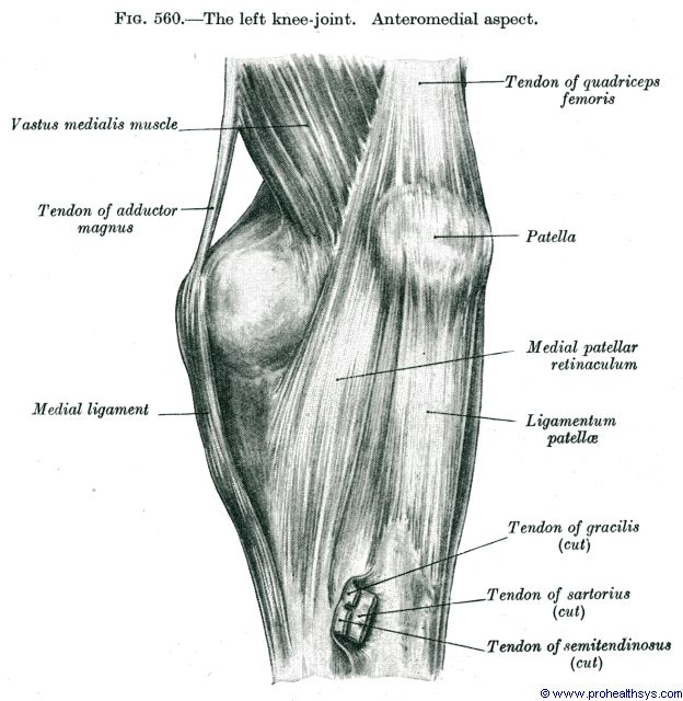 Knee Joint Prohealthsys