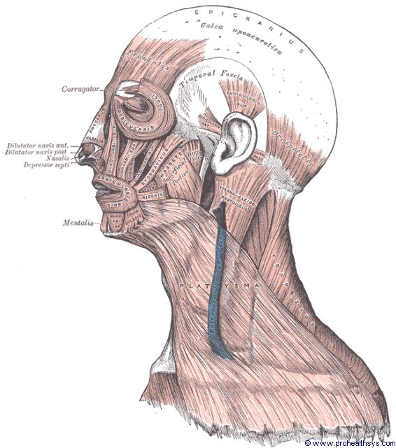 Muscles of the face and neck lateral view - Figure 579