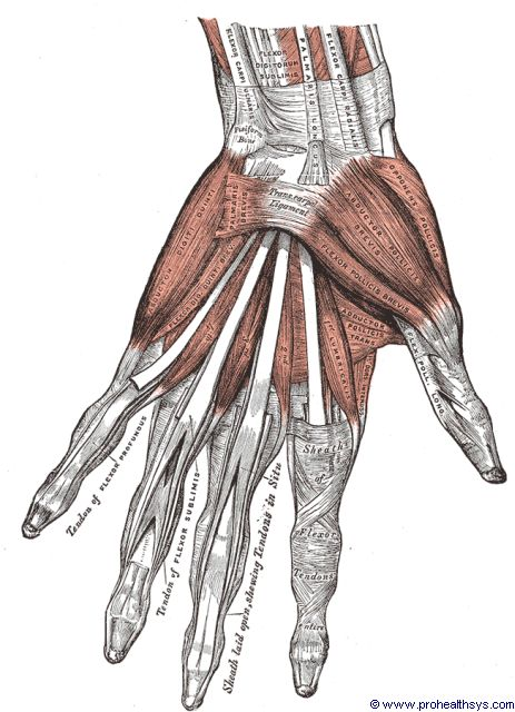 Left hand and wrist muscles and ligaments anterior view - Figure 640