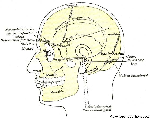 Surface Anatomy of the Head and Neck - Prohealthsys