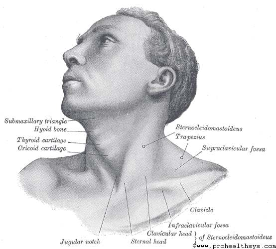 Surface Anatomy Of The Head And Neck Prohealthsys