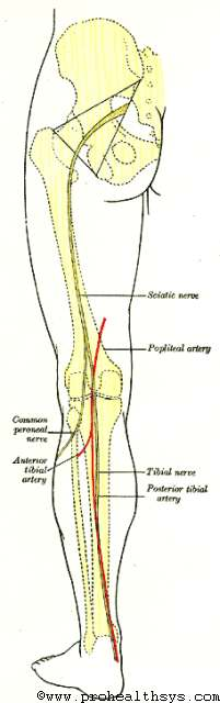 Surface Markings of the Lower Extremity - Prohealthsys