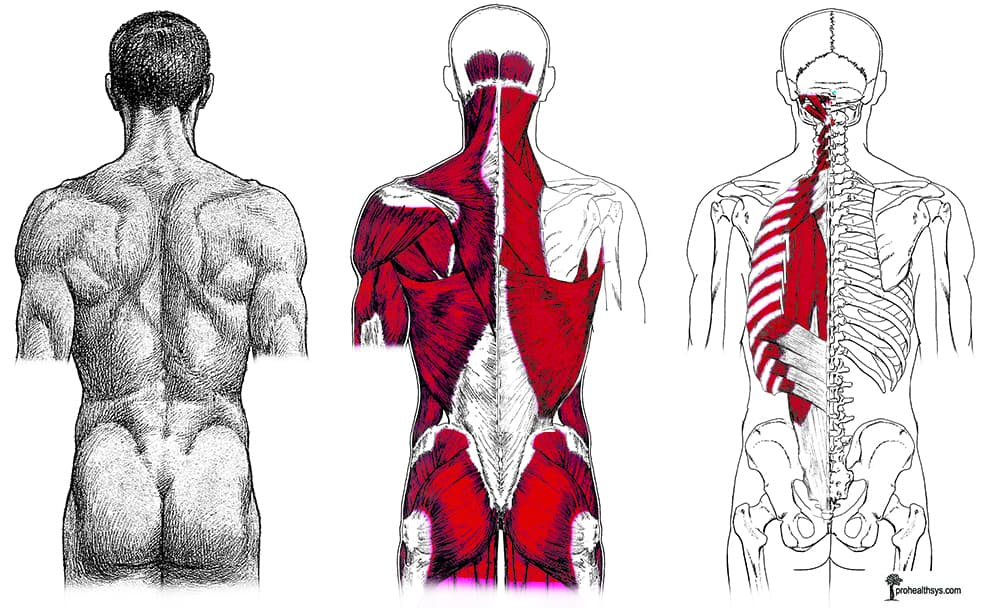 T-spine & back - Prohealthsys