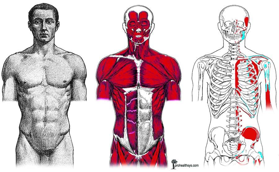 body layers anterior vizniak