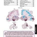 113 neurology vizniak