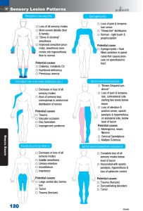 120 sensory nerve loss patterns