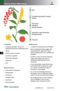 BotanicalMedicine_interior_page_354
