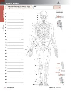 Muscle-Manual-Anatomy-Workbook-page2