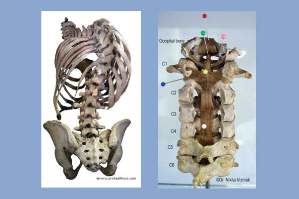 Seminar: Clinical Cadaver Dissection
