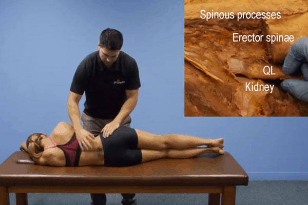 Palpation & Muscle Testing